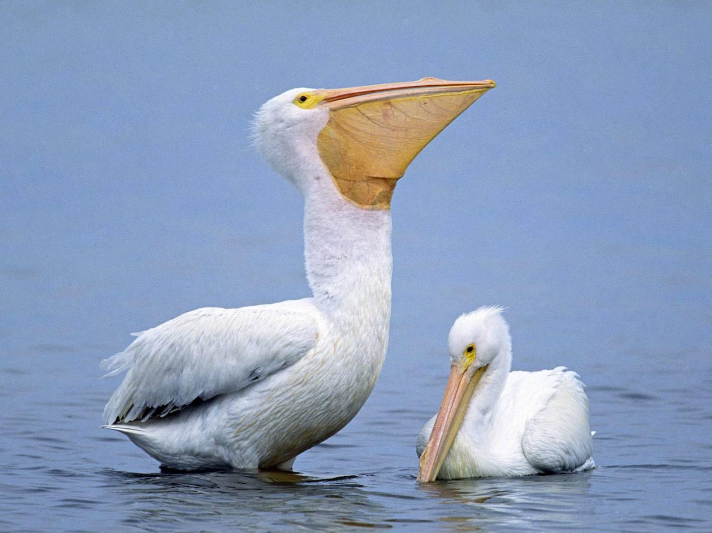 птиц в хорошем качестве